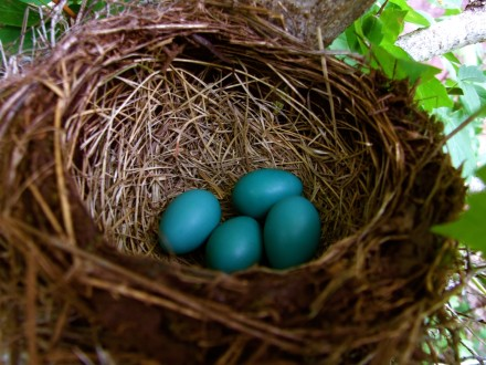 Robin's Egg Blue. Found from Byteful Travel.