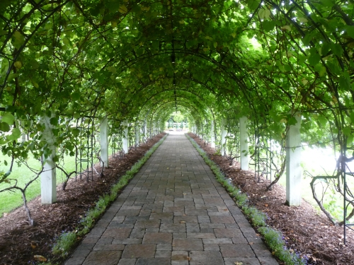 vineyardArchway